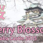 Japan Travel: Cherry Blossom Viewing: Sakura: Japan travel Guide in Osaka